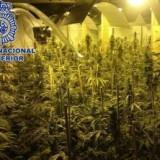 marihuana_spanje_160216