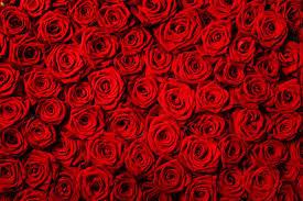 Cocaïne in rozen naar Amsterdam