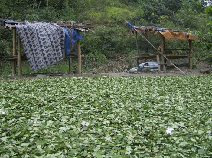 Colombia: drones om cocaveldjes te vernietigen