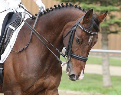 'Miljoenenfraude in Brabantse paarden-business'