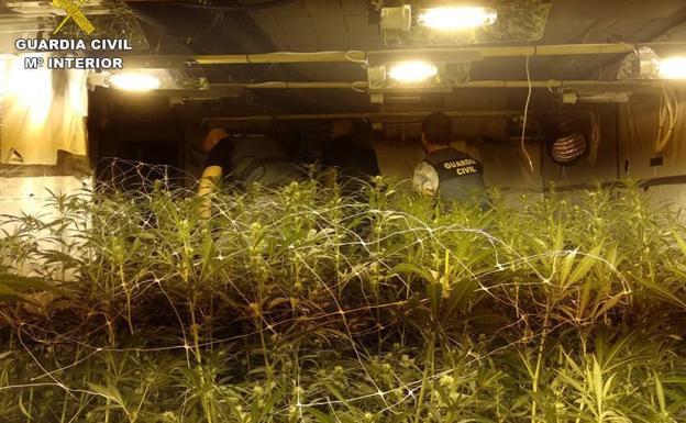 Mega-kwekerij ontmanteld in pakhuis bij Barcelona (VIDEO)