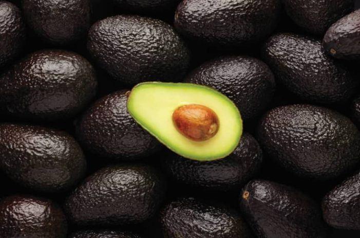 Zeven jaar cel voor grote cocaïnesmokkel tussen avocado's
