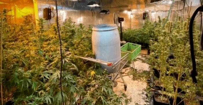 OM: bedrijf in Houten was growshop