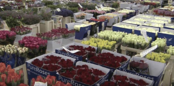 Aanhoudingen voor cokesmokkel via bloementransporten (UPDATE)
