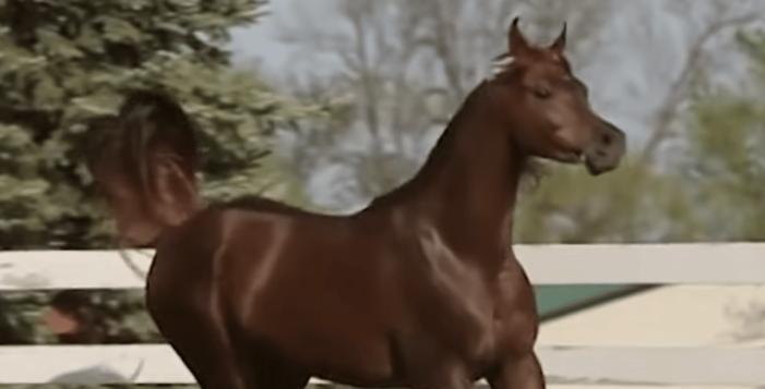 Spaanse ster van paardenboulevard krijgt jaar cel