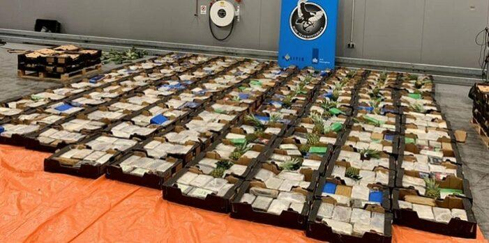 1,5 ton: opnieuw grote cocaïnevangst in Rotterdamse haven
