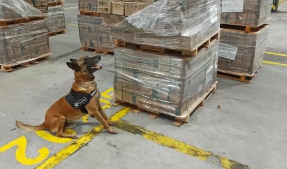 Meer dan 500 kilo coke voor Rotterdam gepakt in Brazilië